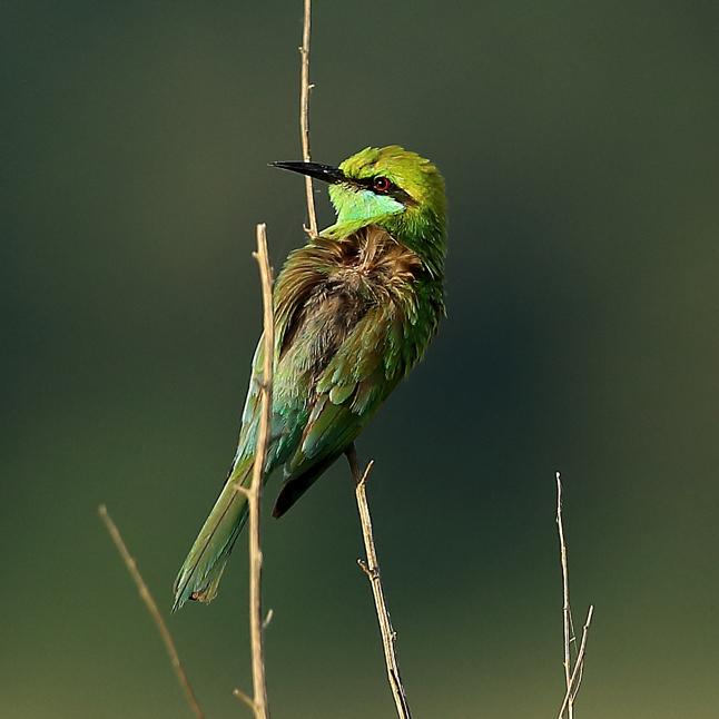 Birding near bhopal