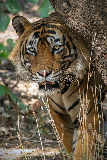 Ranthambhore Safari with Golden Triangle tour