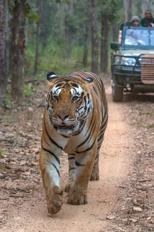 tiger taj and temple tour