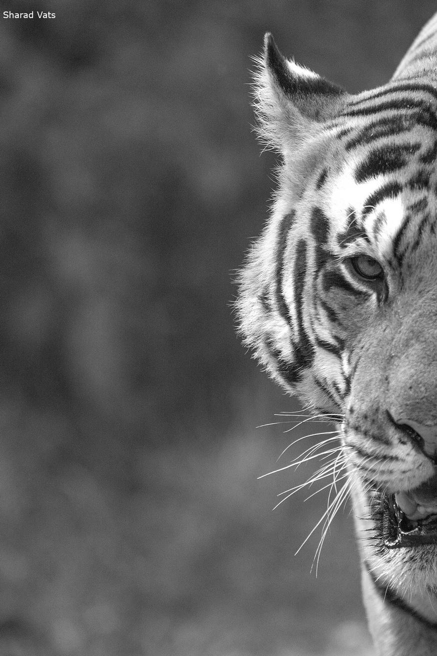 tiger Rhino and elephant tour