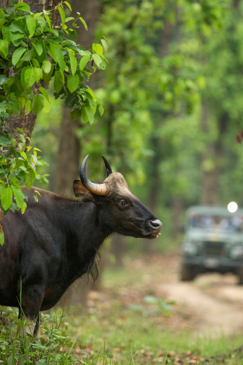 Wildlife of Central india tour