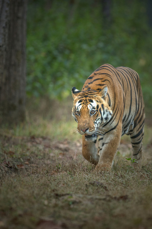 The Don of Indian Wildlife
