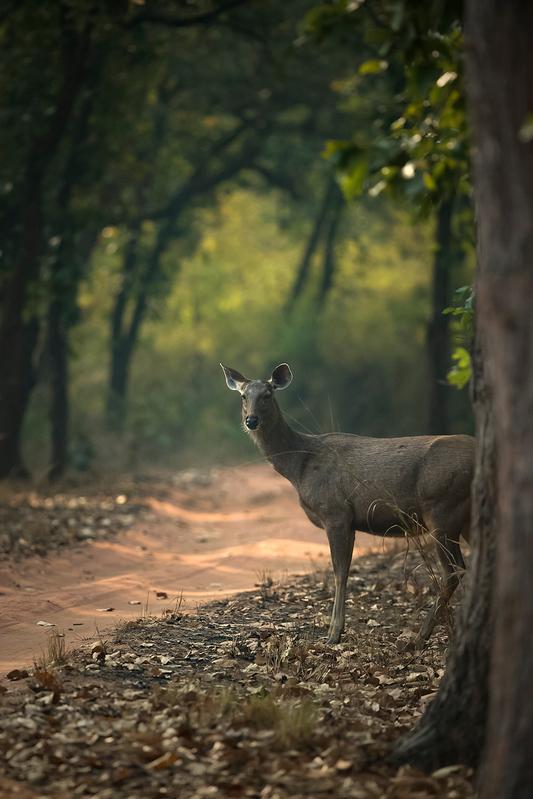 Budget Wildlife Tour