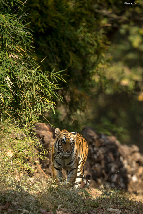 Rajasthan Wildlife Holidays