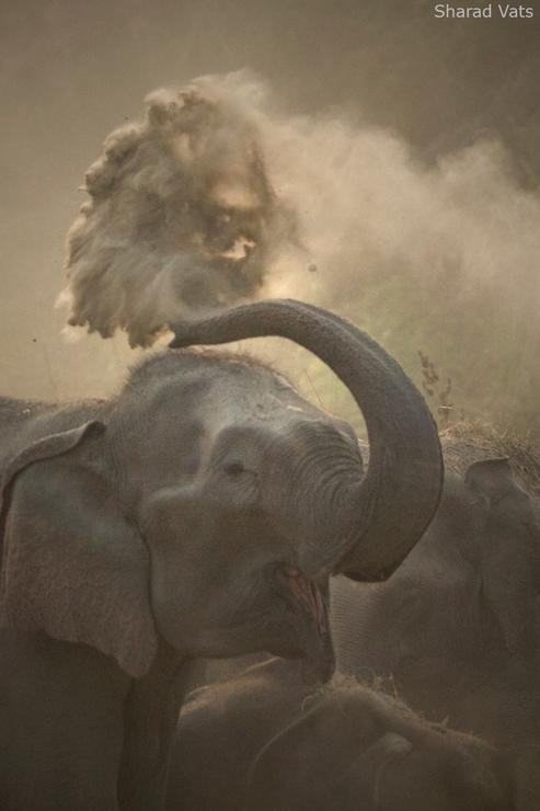 Virgin Indian Wildlife