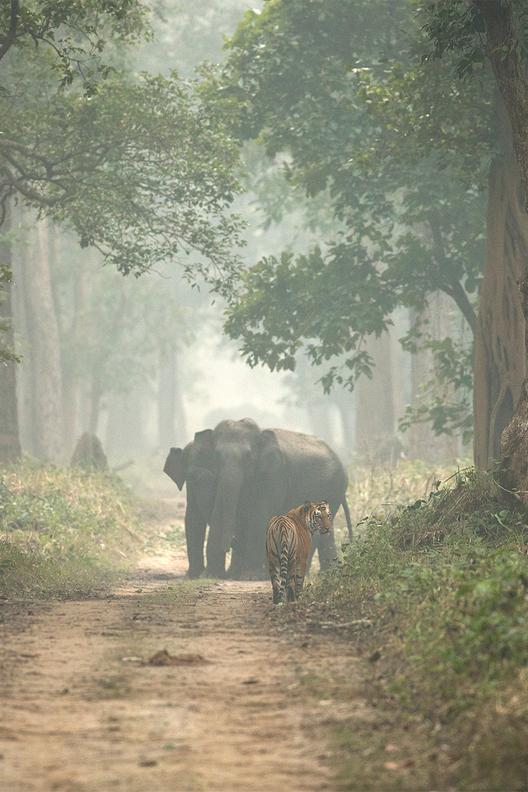 India a Photographer's paradise